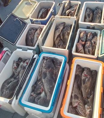 8일 먼바다침선 쓰리걸이 쌍걸이 5짜 4짜 우럭조황요~~~~~~~~~~~~~~~~~~~~~~~~~~~~~``