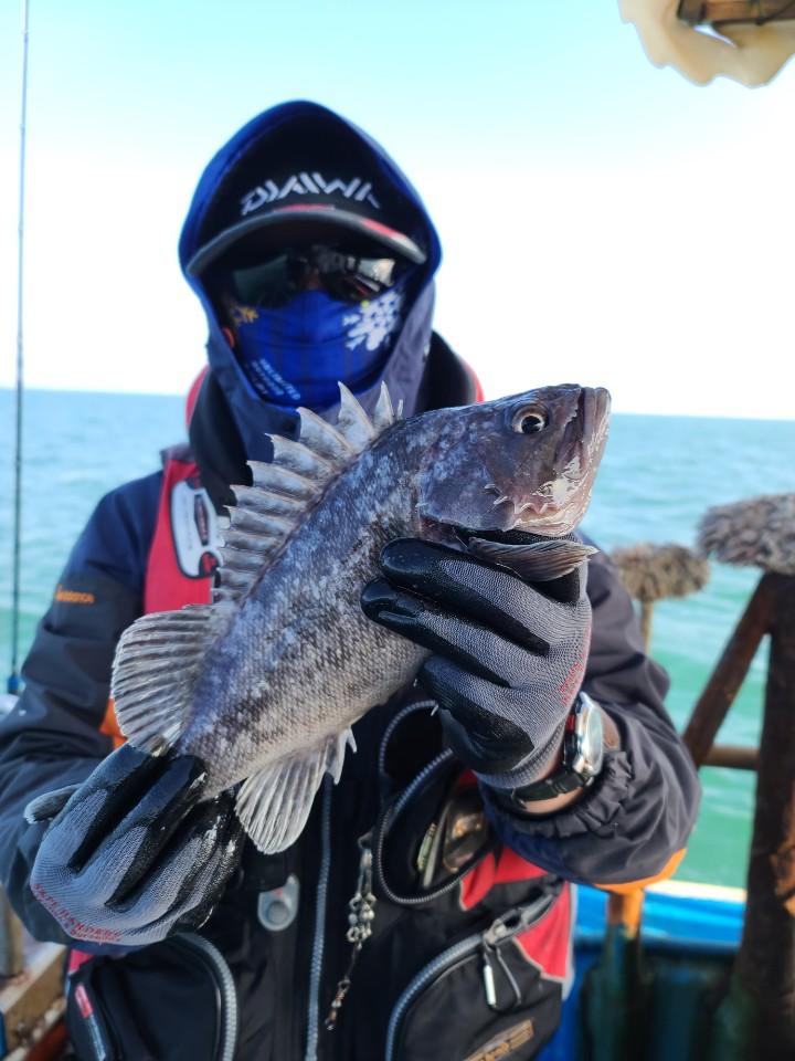 오천 서해호 외수질(생미끼) 조황입니다